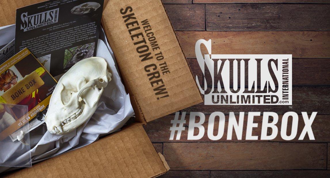 skulls bone box subscirption