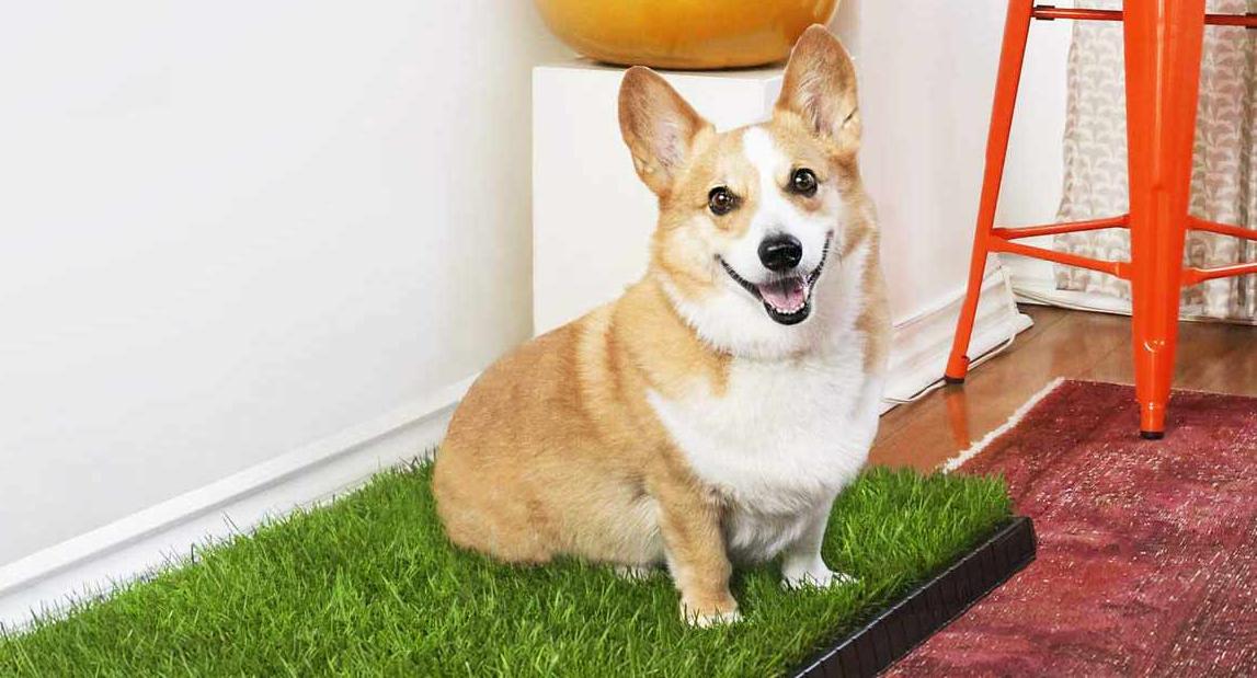 doggy grass subscription