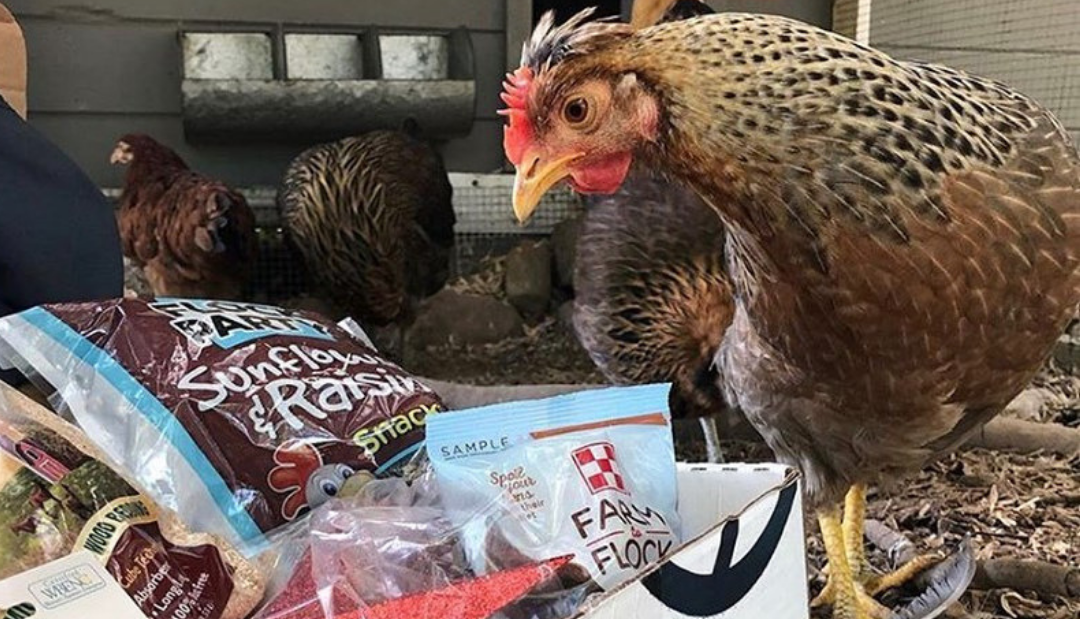 weird subscription for chickens