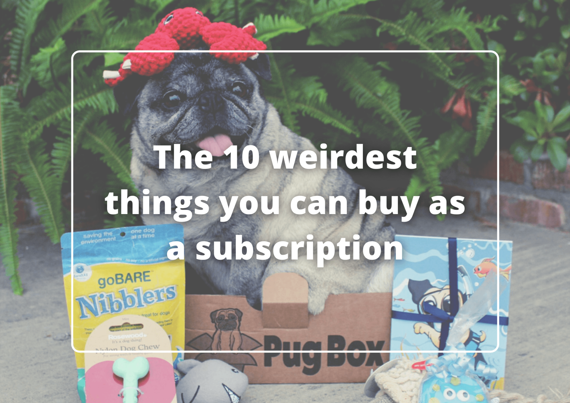 The 10 weirdest things you can buy as a subscription